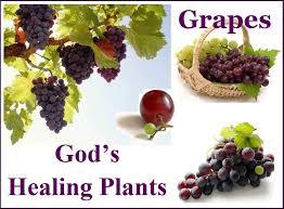grapes-2jpg